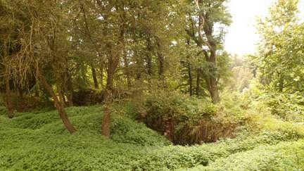 Zřícenina hradu Ronovec.