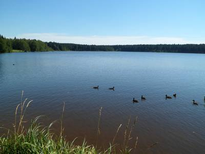Rybník Medlov, pohed od severu.
