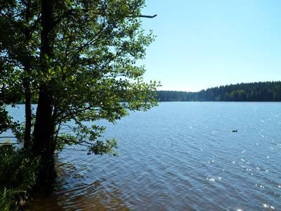 Rybník Medlov, pohed od východu.